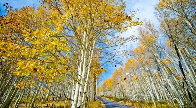 Fall Foilage Pine Canyon Shellie Ferrer Luxury Wedding Planner Deer Valley UT